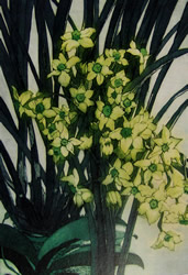 Jonquils with Orchids