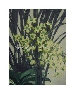 Jonquils with Orchids Etching